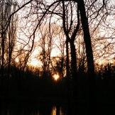 Le soleil dans les arbres de l'étang.