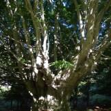 Un tout petit arbre.
