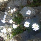 Des jolies fleurs