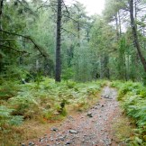 Le chemin s'aventure un peu dans les bois.