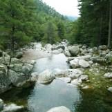 La rivière se faufile au milieu de la forêt de pins lariccio