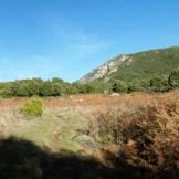 Un plateau de fougère rousses