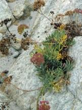 Des plantes sur les rochers