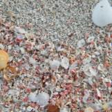 La plage est pleine de petits coquillages