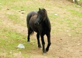 Un cheval au couvent