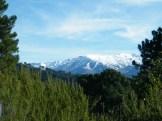 Entre les arbres, les monts enneigés