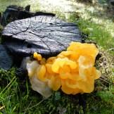 Un drôle de champignon