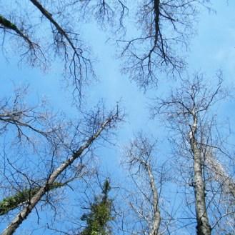 La cime des arbres en mars