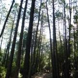 On continue sous les pins
