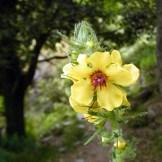 Une jolie fleur sur le chemin