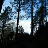 Le départ sous les pins