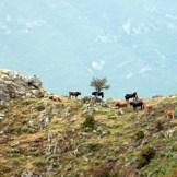 Je crois que quand on est une vache, c'est là qu'il faut être!