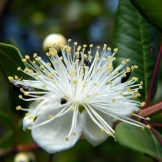 Une jolie fleur avec des bébettes
