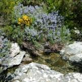 Un petit cours d'eau