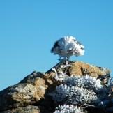 Un buisson gelé