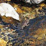 L'embouchure est remplie de grenouilles