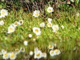 Des petites fleurs sur le chemin