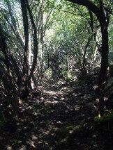 Dernier sentier jusqu'à Pedi Muredda
