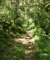 Le chemin serpente sous les arbres