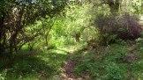 Dans la forêt de Murzo