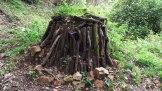 La fabrication du charbon de bois