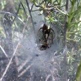 Il y a plein d'araignées partout