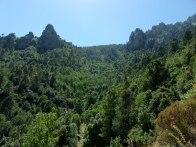 La forêt au dessus de la mine