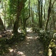 Le sentier serpente sous les arbres