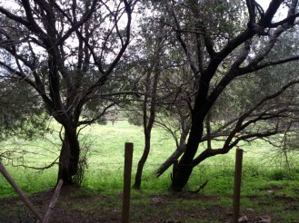 Derrière les arbres, un champ rempli de fleurs