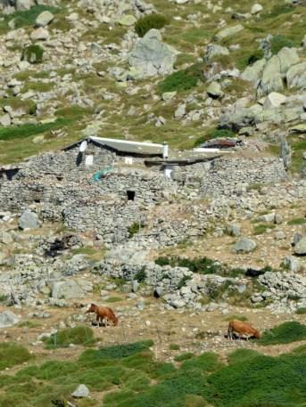 La bergerie de Muraccioli