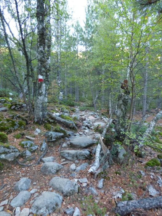 Dans la forêt de Valdu Niellu