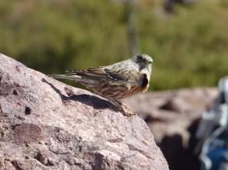 Un oiseau au refuge de Ciottulu di i Mori