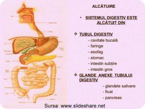 digestia-sistemul-digestiv