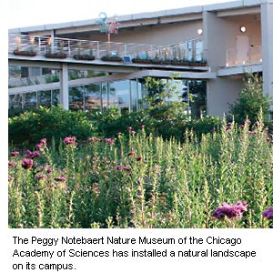 city of chicago natural landscaping