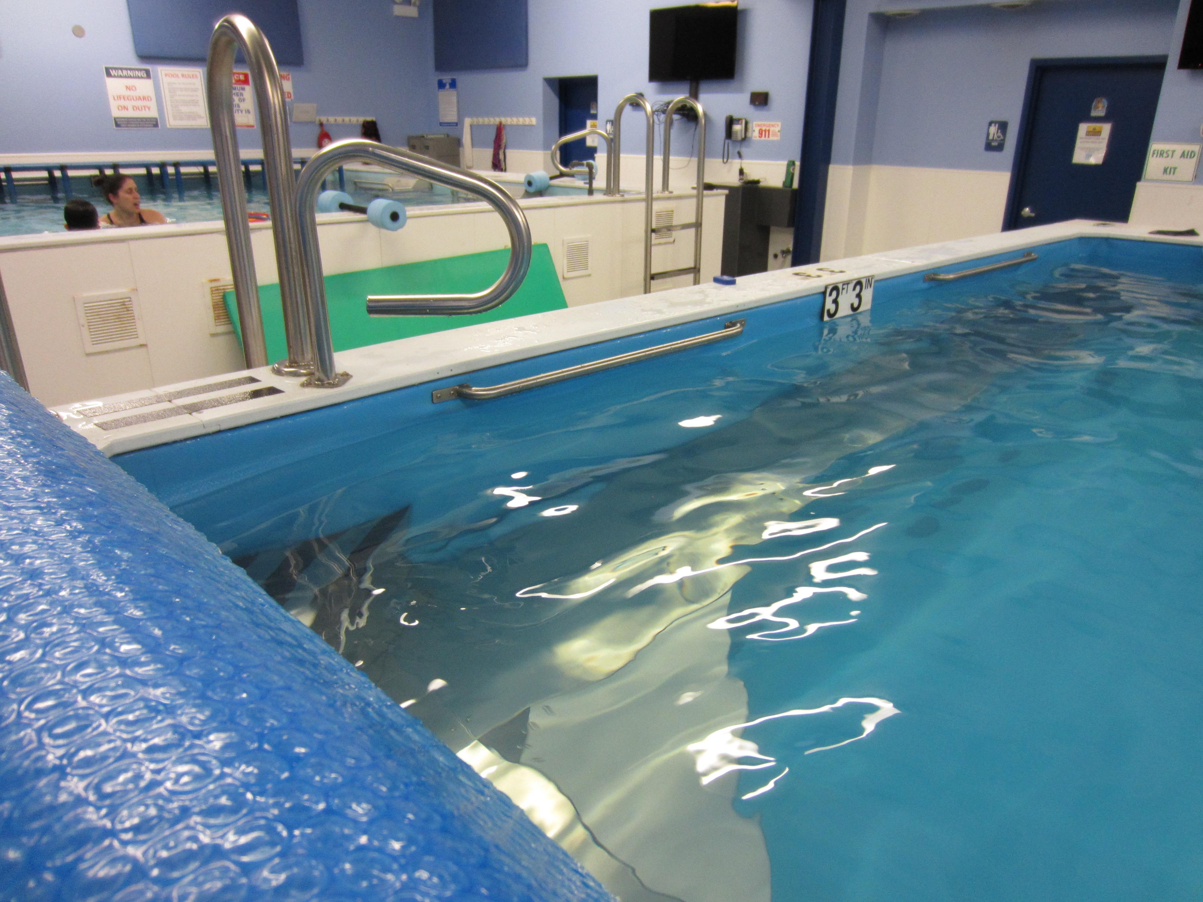 Best Swim Lessons Better Coaching Better Pools Chicago Blue Dolphins Swim School