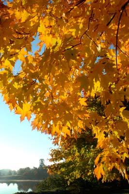 An October FallColor Tree Walk  Chicago Botanic Garden