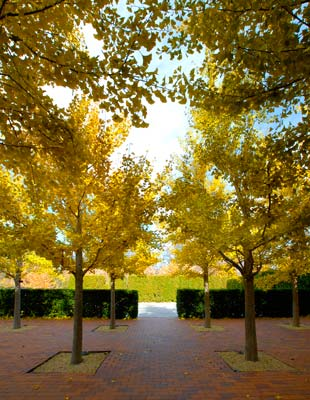 Fall In Chicago Wallpaper Early Fall Wows Chicago Botanic Garden