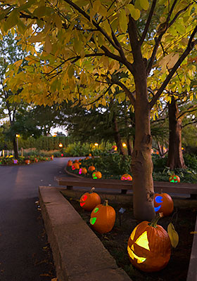 Autumn Fall Live Wallpaper Night Of 1 000 Jack O Lanterns Chicago Botanic Garden
