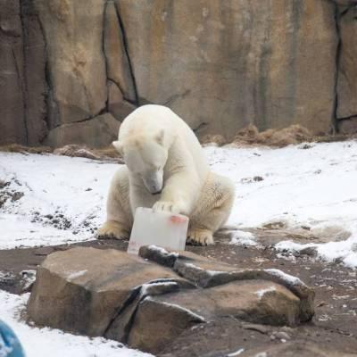 ستخرج حديقة حيوان «لينكولن بارك» من سباتها الشتوي في مارس