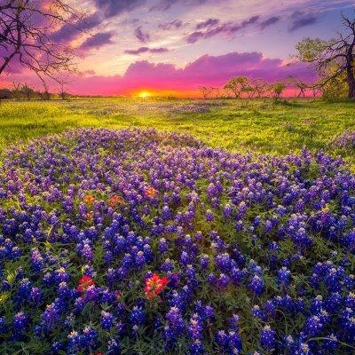 بعض الأماكن الخلابة لمشاهدة الأزهار في الولايات المتحدة الأمريكية