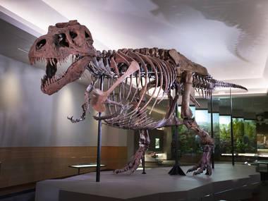 إلقاء نظرة على الهيكل العظمي الأكثر اكتمالاً في العالم