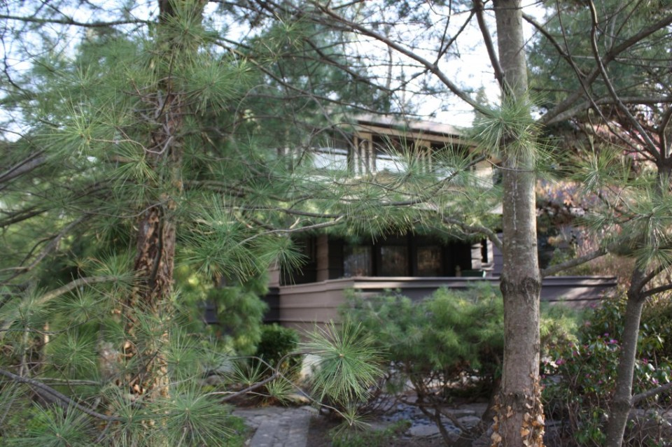 Through the pines lies the Brown House at 2420 Harrison in Evanston