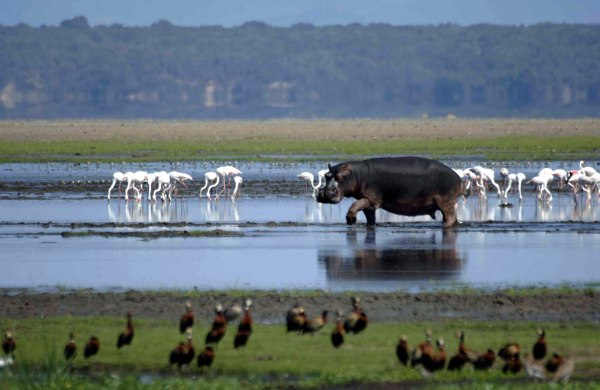 isimangaliso-wetland-park