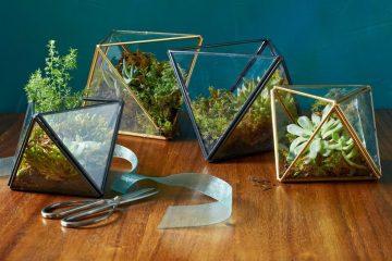 eco-friendly gift