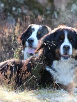 Mikä on koirankasvatuksessa kaikkein tärkeintä?