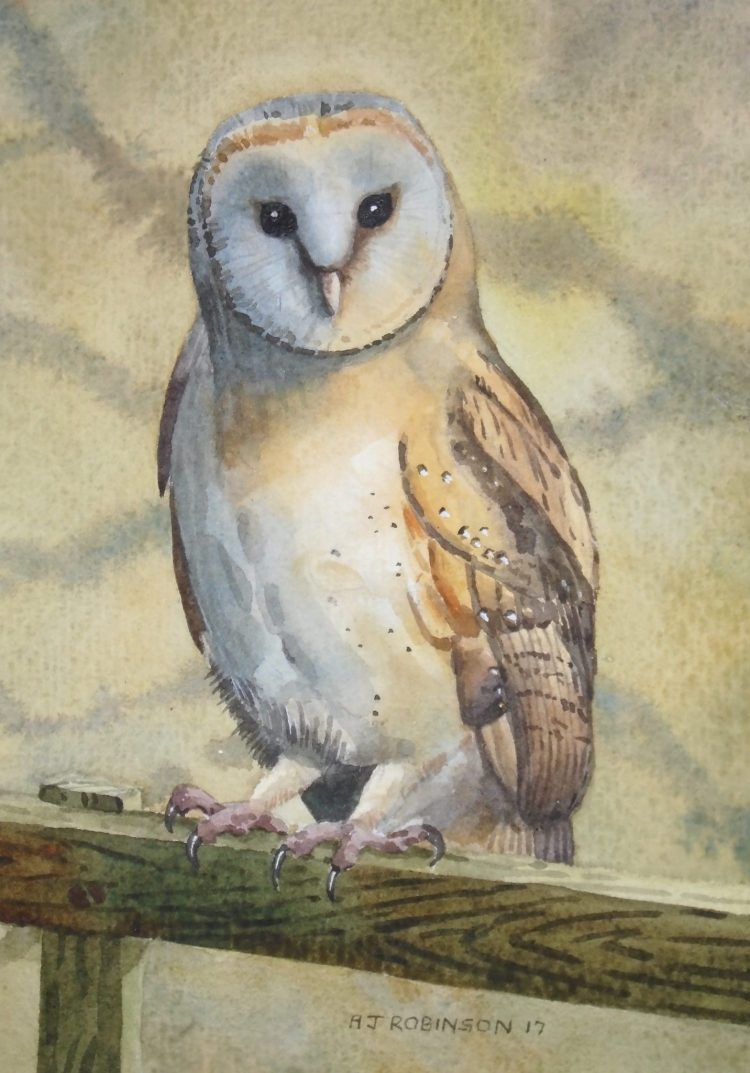 Barn Owl on a Fence - watercolour