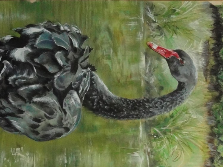 The Black Swan - pastel/ acrylic ink