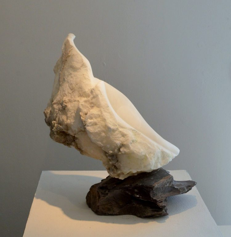 Sea Shell - Alabaster