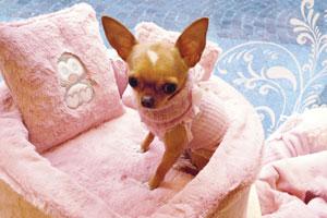 Abiti e accessori per cani di piccola taglia  CHIChuahua Boutique