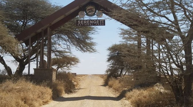 Astonishing 1-Day Road Trip from Mugumu, Serengeti to Arusha